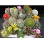 100 Sementes De Cactus 20 Tipos Sortidos Frete Gratis Garden