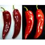 Anaheim Pepper Pimenta Sementes Pimentões Da Califórnia
