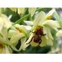 Moringa Oleifera - 08 Estacas Para Plantio