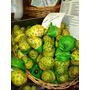 Semente De Noni Fruta Exotica Que Previne E Conbate O Cance