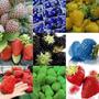 Morangos Exóticos E Coloridos 10 Sementes Mix - Frete Barato