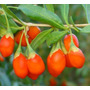 30 Sementes De Goji Berry Certificada Para Produção De Mudas