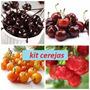 Kit Sementes De Cerejas Pretas,amarelas, Roxas E Vermelhas