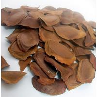 Sementes Mogno Africano, Khaya Senegalensis 50 Gramas