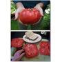 Sementes Tomate Gigante + Frete Gratis