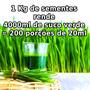 Sementes Orgânicas Grama Trigo Suco Verde Wheatgrass 1kg