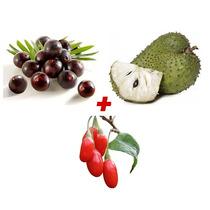 Sementes Açai Pré Germinada + Graviola Gigante + Goji Berry