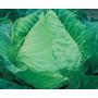 Sementes De Repolho Coracao De Boi Pcte C/ 100 Gramas