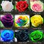 20 Sementes Rosa Mix 9 Cores Rara Importadas Frete/gr. Flor