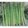 250 Sementes Aspargo Verde Horta Em Casa Frete Gratis