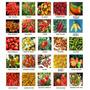 Coleção De Pimenta 26 Especies + Bhut Jolokia + T. Morouga