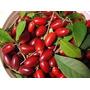 Fruta Do Milagre Para Mudas 50 Sementes, Manual De Cultivo