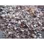 1 Kg Conchas Marinhas Para Artesanato Ou Decoração Aquários