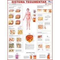 Mapa Do Sistema Tegumentar Humano - Beleza Saúde Pêlos Derme