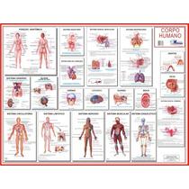 Mapa Sistemas Do Corpo Humano - 0,90 X 1,20m