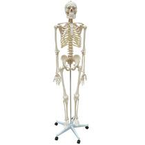 Esqueleto Padrão Aprox. 170 Cm Com Rodas - Modelo Anatômico
