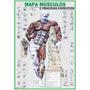 Mapa Músculos E Principais Exercícios - Gigante !!!!
