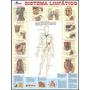 Mapa Sistema Linfático Humano - Anatomia Medicina
