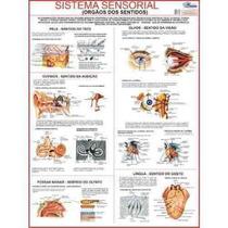 Mapa Sistema Sensorial Do Corpo Humano 120 X 90 Cm