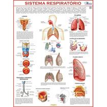 Mapa Do Sistema Respiratório - Gigante !!! 120 X 90 Cm
