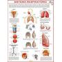 Mapa Gigante: Sistema Respiratório Humano