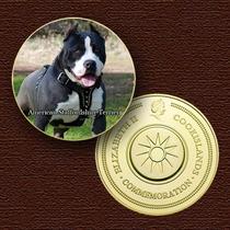 10770 - Cão Da Raça (american Staffordshire Terrier) - B. Ou