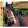 Cd- 20 Grandes Sucesso Gaúchos - Vol 3 - Frete Gratis