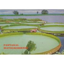Yyy-5298- Postal Pantanal Do Mato Grosso - Vitoria Regia