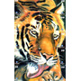 Ct - Puzzle 10 Cartões Do Tigre - Telemar Rio De Janeiro