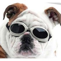 Óculos De Sol Para Cachorro Dog Doggle Moda Verão!! Promoção