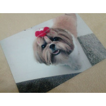 Papel Foto A6 Glossy 180g (impermeavel) C/20 (aprox 10x15)