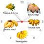 Relógio De Parede Redondo Fruta Banana Nanica