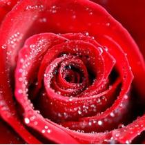Painel Adesivo Decorativo Rosas Melhor Preço Mercado Livre