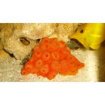 Sun Coral Red Importado Gg