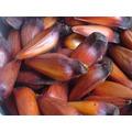 Frete Gratis Pinhão Araucária 20 Kg Consumo Ou Semente