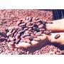 Amêndoas De Cacau Secas Sem Agrotóxico P/ Consumo 1 Kg 29,90