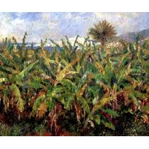 Plantação De Bananas Bananeira 1881 Pintor Renoir Tela Repro