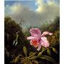 Beija-flor Colorido Orquídea Rosa Galho Heade Na Tela Repro