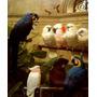 Arara-azul Papagaio Pintura Do Pintor Marks Tela Reprodução