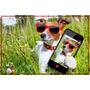 Poster Grande Hd Fashion Dog #9 Moda Óculos 80x120cm Cartaz