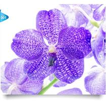 Adesivos 123 Decorativos Flores Orquídeas Natureza