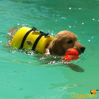 Colete Salva Vidas Para Cães Ativa Pet Vest - Pequeno (p)