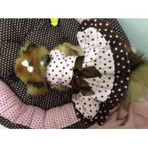 Vestido Petit Poa - Typpi Pet A Grife Do Seu Pet
