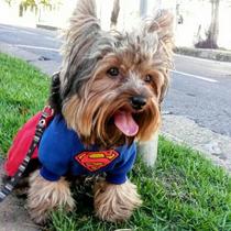 Beta Moda Pet Fantasia Super Homem