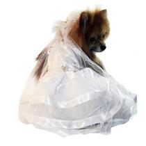 Vestido De Noiva Para Cachorra - Tamanho Gg