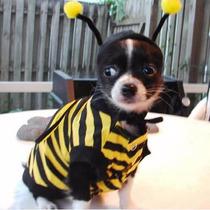 Roupa Cachorro Fantasia Abelha Raças Pequenas Pet Lord