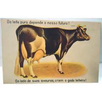 Bilhete Postal Anos 30 Criação Gado Leiteiro - Prop. Rural