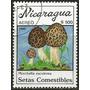 Cogumelo - 18024 - Nicaragua - Cogumelos Comestiveis