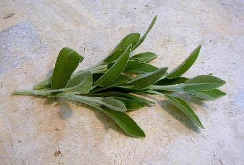 Sementes De Salvia