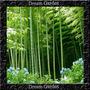 Bambu Gigante 25metros Bambusa Arundinacea Sementes P/ Mudas